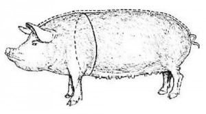 замер окружности груди свиньи
