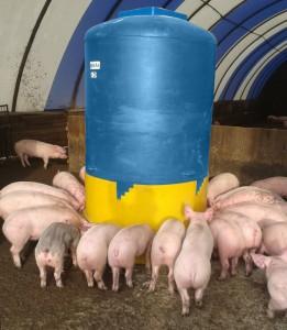 дозирование корма для свиней