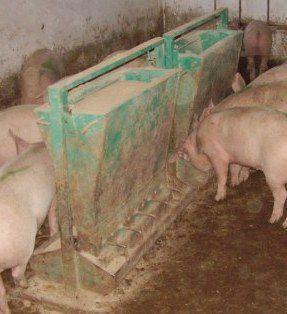 Кормушка для свиней своими руками с фото 946