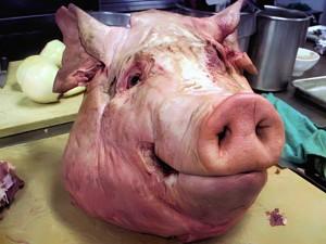 листериоз свиней